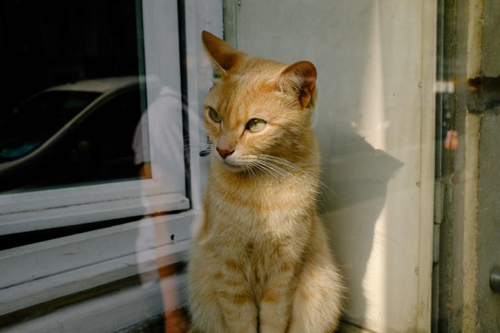 Cat in window Paris Fall 2017