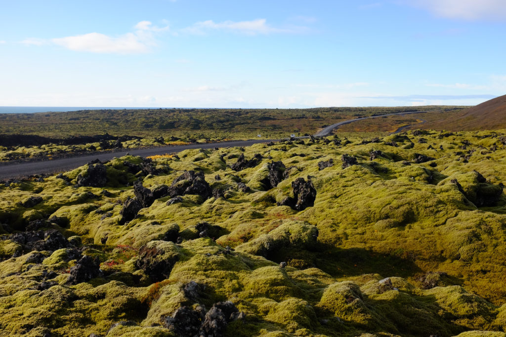 Moss covered lava rocks outside of Reykjavik Iceland