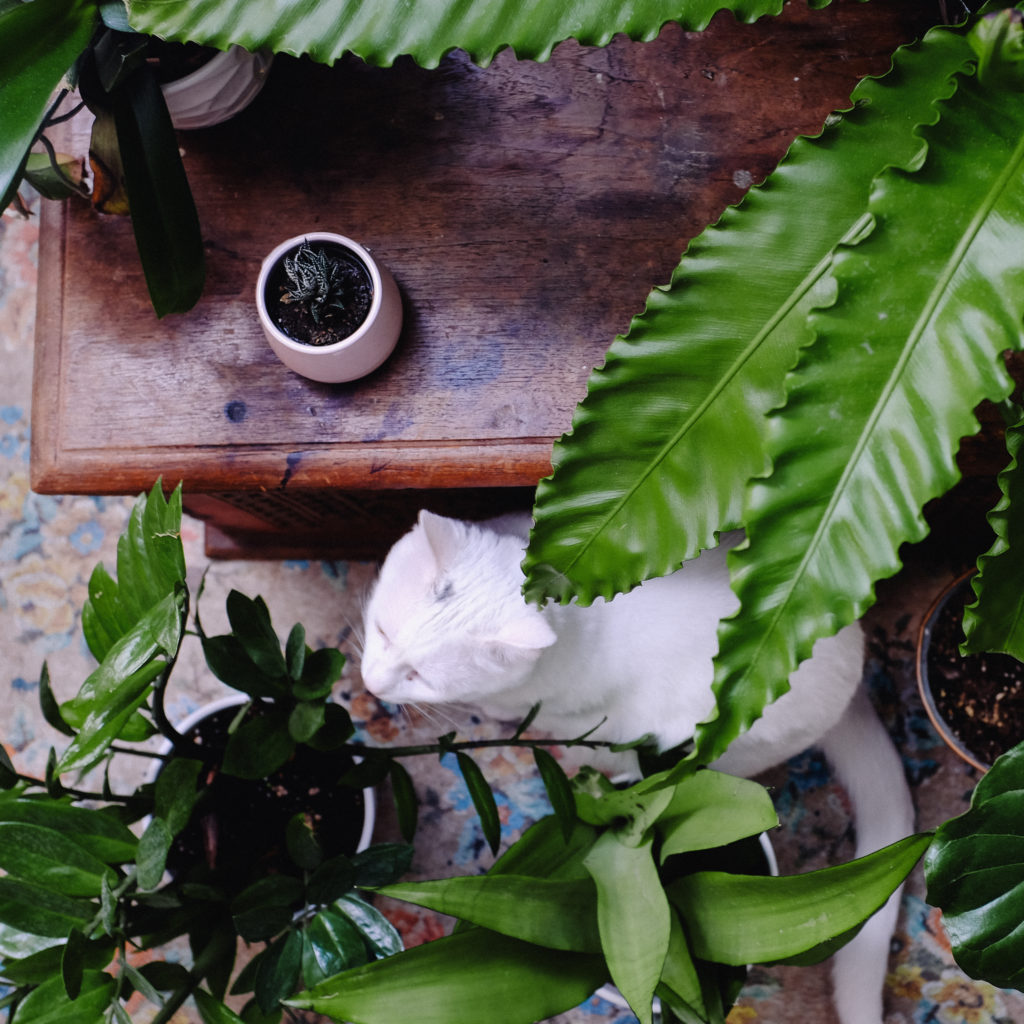khao manee with house plant collection