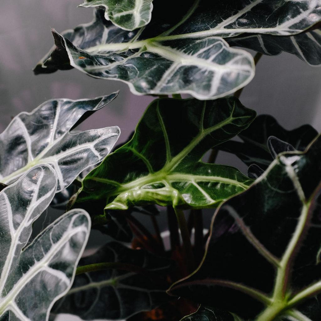 house plant detail
